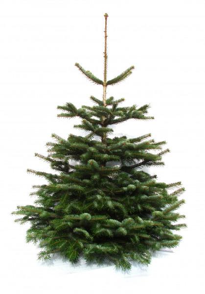 Weihnachtsbaum ohne Ständer